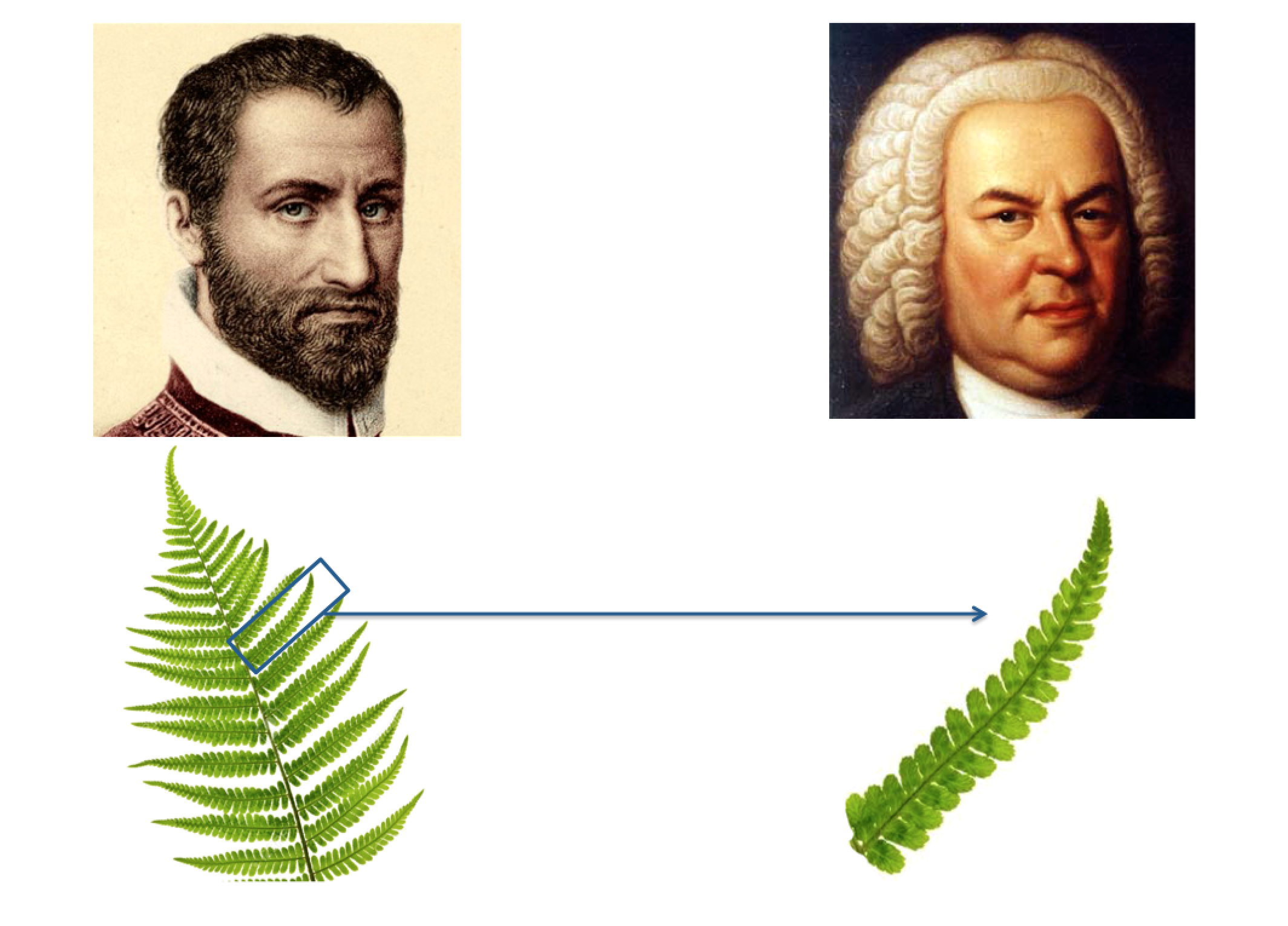 Palestrina Bach fern
